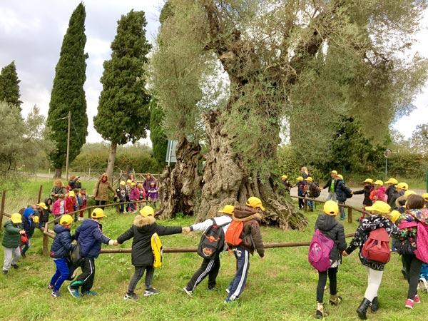 Visite didattiche nei frantoi e nelle aziende olivicole