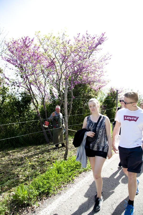 Non capitano tutti i giorni 30 danesi a passeggio fra gli ulivi