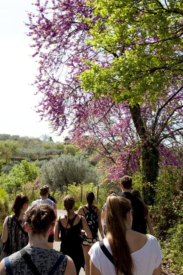 Siliquastri in fiore e querce cariche di amenti rendono il paesaggio ancora più gradevole